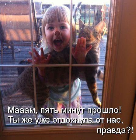 Звери в теме;) - Страница 4 Smeshnie_kartinki_1367058263270420131493