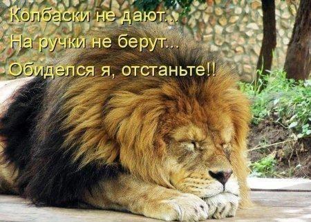 Звери в теме;) - Страница 4 Smeshnie_kartinki_1373231508080720131623