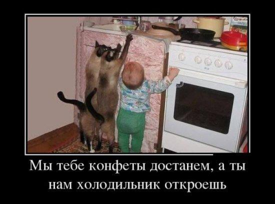 http://www.anekdotov-mnogo.ru/image-prikol/smeshnie_kartinki_137407218417072013534.jpg