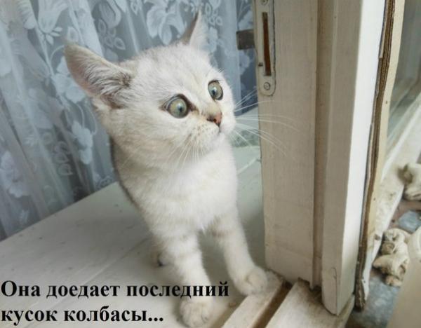 http://www.anekdotov-mnogo.ru/image-prikol/smeshnie_kartinki_1374086103170720132229.jpg
