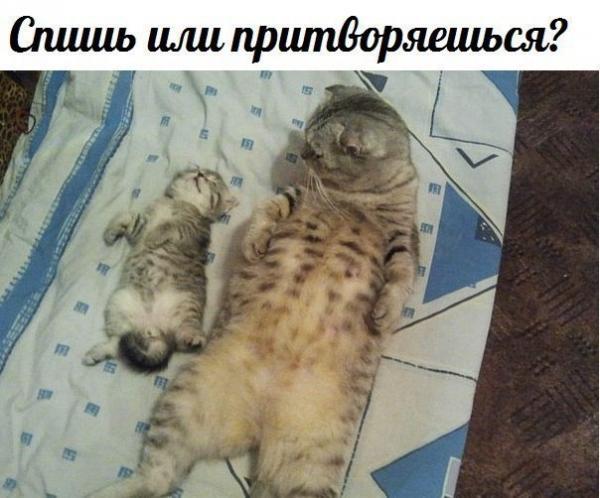 Звери в теме;) - Страница 4 Smeshnie_kartinki_1374753674250720132092