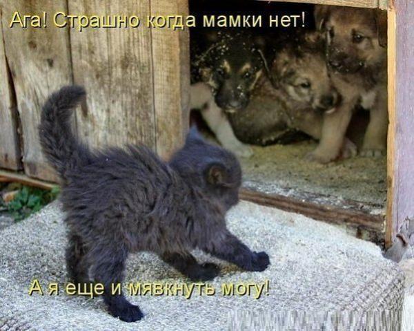 http://www.anekdotov-mnogo.ru/image-prikol/smeshnie_kartinki_1374820344260720131431.jpg