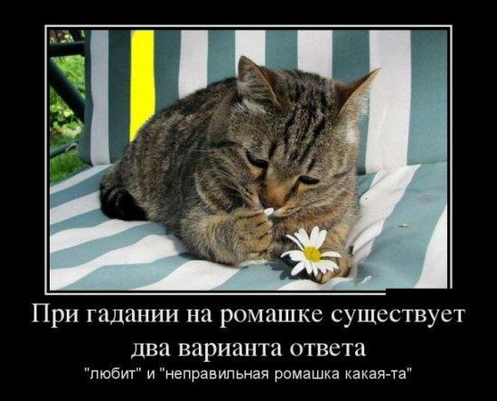 http://www.anekdotov-mnogo.ru/image-prikol/smeshnie_kartinki_137535551201082013195.jpg