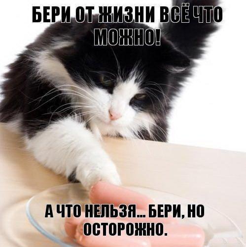 http://www.anekdotov-mnogo.ru/image-prikol/smeshnie_kartinki_1375789042060820132153.jpg