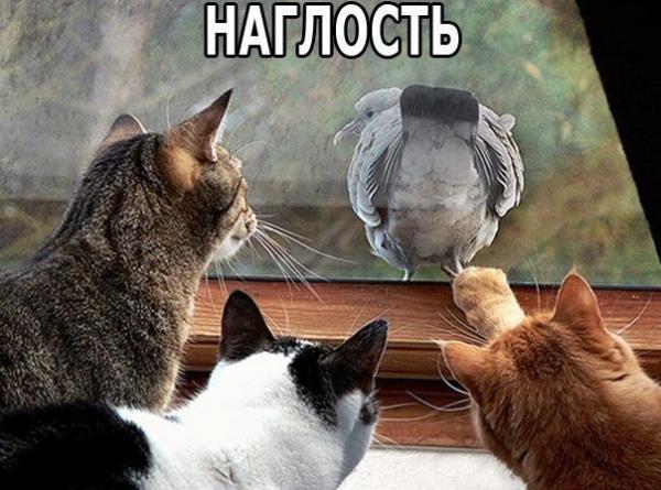 http://www.anekdotov-mnogo.ru/image-prikol/smeshnie_kartinki_1377011105200820131891.jpg