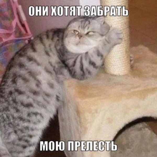 http://www.anekdotov-mnogo.ru/image-prikol/smeshnie_kartinki_137705125121082013670.jpg