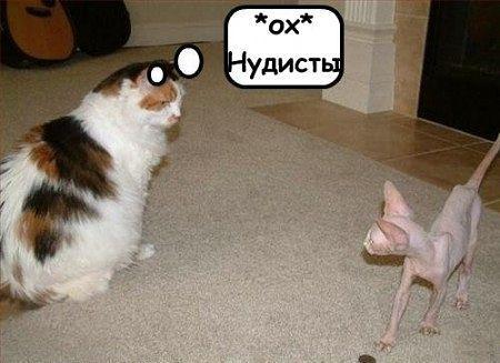 http://www.anekdotov-mnogo.ru/image-prikol/smeshnie_kartinki_137746885826082013505.jpg