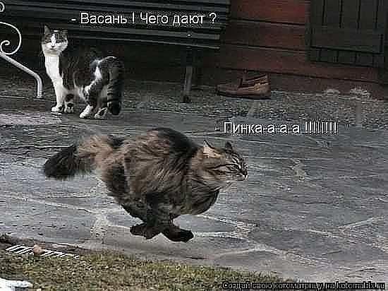 http://www.anekdotov-mnogo.ru/image-prikol/smeshnie_kartinki_1377469913260820132069.jpg