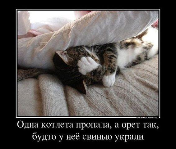 http://www.anekdotov-mnogo.ru/image-prikol/smeshnie_kartinki_1377508618260820131272.jpg