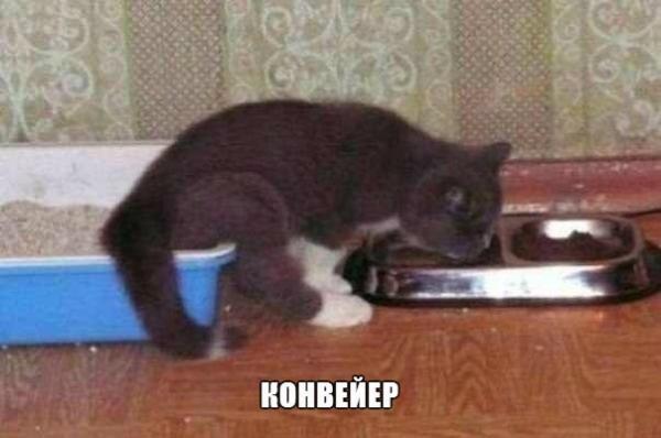 http://www.anekdotov-mnogo.ru/image-prikol/smeshnie_kartinki_137904381513092013708.jpg