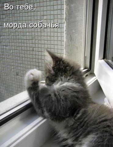 http://www.anekdotov-mnogo.ru/image-prikol/smeshnie_kartinki_137935692016092013750.jpg