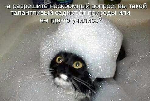 http://www.anekdotov-mnogo.ru/image-prikol/smeshnie_kartinki_137938370017092013413.jpg