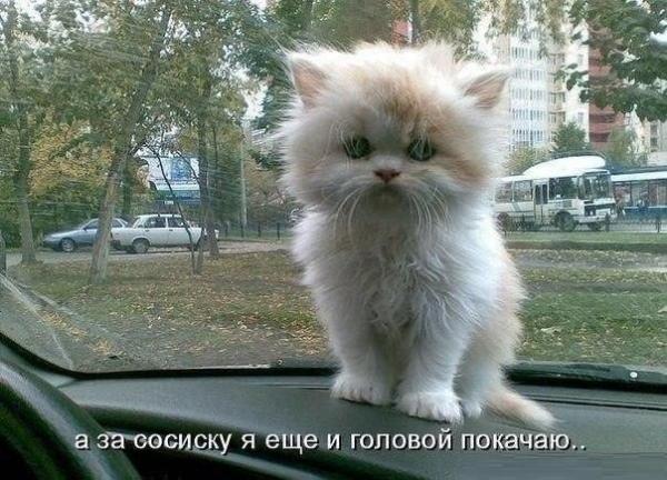 http://www.anekdotov-mnogo.ru/image-prikol/smeshnie_kartinki_1379554988190920131701.jpg