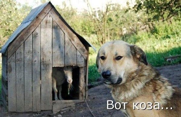 http://www.anekdotov-mnogo.ru/image-prikol/smeshnie_kartinki_138013766928.jpg