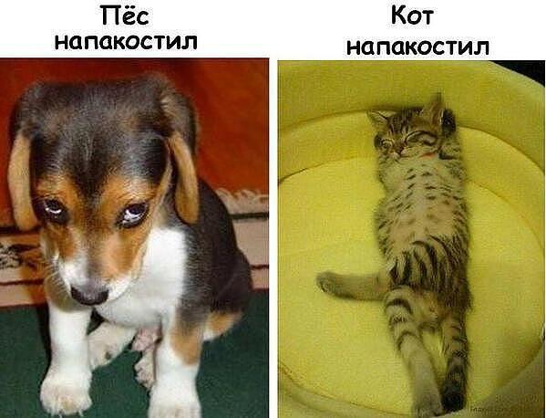 http://www.anekdotov-mnogo.ru/image-prikol/smeshnie_kartinki_138048788759.jpg