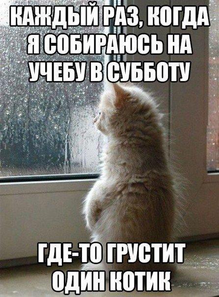http://www.anekdotov-mnogo.ru/image-prikol/smeshnie_kartinki_138126201033.jpg