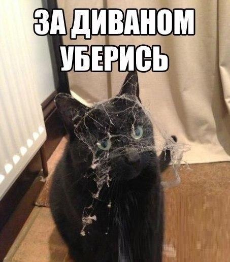 http://www.anekdotov-mnogo.ru/image-prikol/smeshnie_kartinki_138141585899.jpg