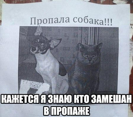 http://www.anekdotov-mnogo.ru/image-prikol/smeshnie_kartinki_138176437213.jpg