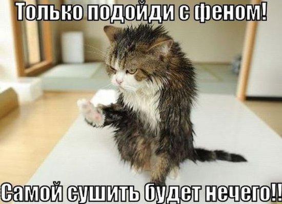 http://www.anekdotov-mnogo.ru/image-prikol/smeshnie_kartinki_138176437222.jpg