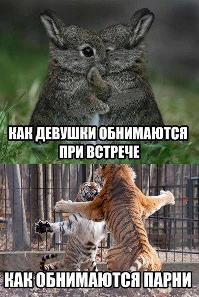 http://www.anekdotov-mnogo.ru/image-prikol/smeshnie_kartinki_13821785813.jpg