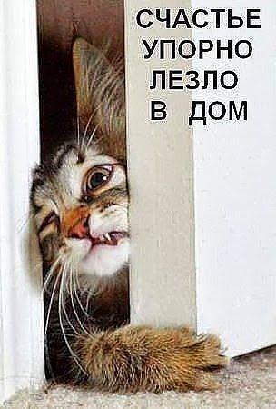 http://www.anekdotov-mnogo.ru/image-prikol/smeshnie_kartinki_138246253427.jpg