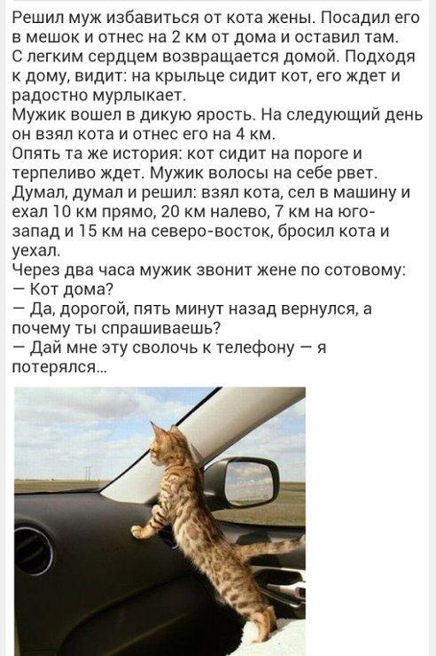 http://www.anekdotov-mnogo.ru/image-prikol/smeshnie_kartinki_13824915031.jpg