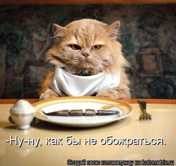 http://www.anekdotov-mnogo.ru/image-prikol/smeshnie_kartinki_138350189145.jpg
