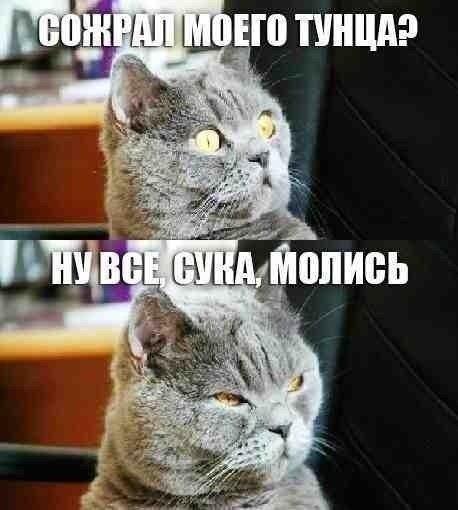 http://www.anekdotov-mnogo.ru/image-prikol/smeshnie_kartinki_138392967059.jpg