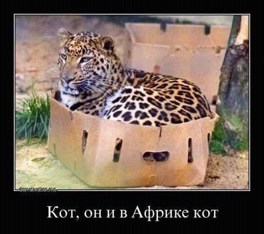 http://www.anekdotov-mnogo.ru/image-prikol/smeshnie_kartinki_138416514340.jpg