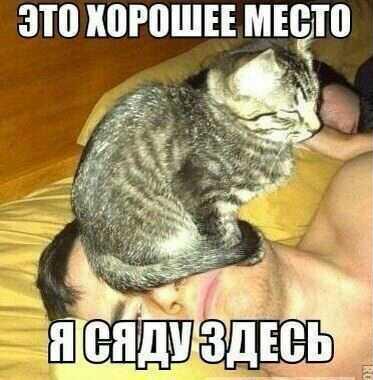 http://www.anekdotov-mnogo.ru/image-prikol/smeshnie_kartinki_138482475673.jpg