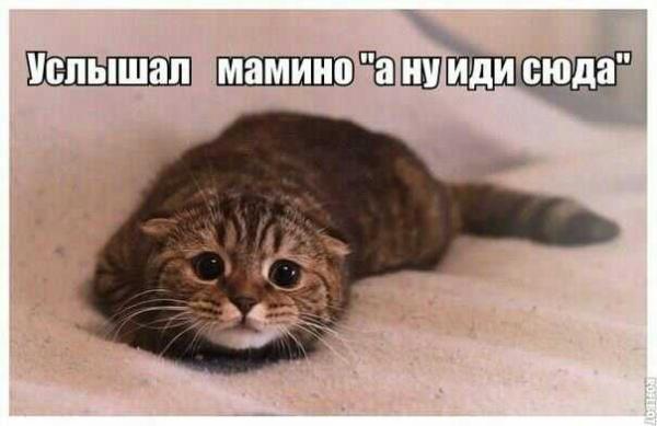 http://www.anekdotov-mnogo.ru/image-prikol/smeshnie_kartinki_138482479354.jpg