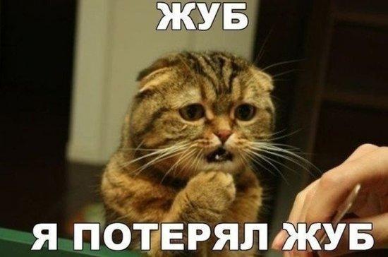 http://www.anekdotov-mnogo.ru/image-prikol/smeshnie_kartinki_13850553248.jpg