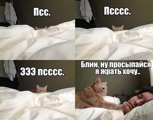 http://www.anekdotov-mnogo.ru/image-prikol/smeshnie_kartinki_138582095915.jpg