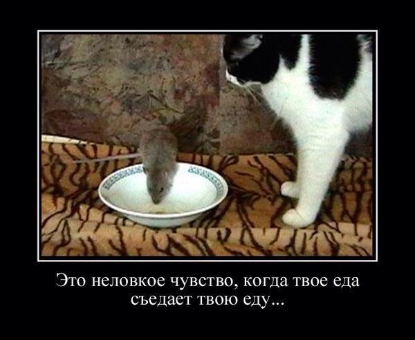 http://www.anekdotov-mnogo.ru/image-prikol/smeshnie_kartinki_138588874665.jpg