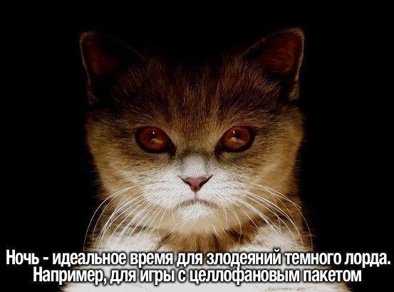 http://www.anekdotov-mnogo.ru/image-prikol/smeshnie_kartinki_138590044395.jpg