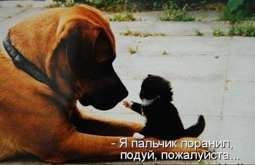 http://www.anekdotov-mnogo.ru/image-prikol/smeshnie_kartinki_138590044464.jpg