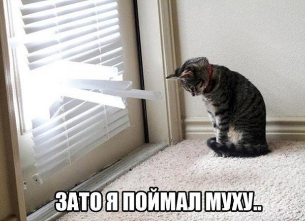 http://www.anekdotov-mnogo.ru/image-prikol/smeshnie_kartinki_138590044484.jpg