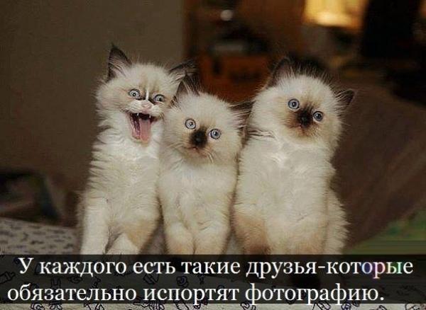 http://www.anekdotov-mnogo.ru/image-prikol/smeshnie_kartinki_138594196951.jpg