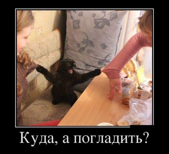 http://www.anekdotov-mnogo.ru/image-prikol/smeshnie_kartinki_13866447004.jpg