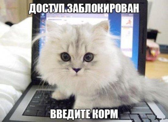 http://www.anekdotov-mnogo.ru/image-prikol/smeshnie_kartinki_138681933755.jpg