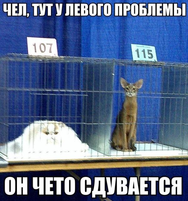 http://www.anekdotov-mnogo.ru/image-prikol/smeshnie_kartinki_138685654334.jpg