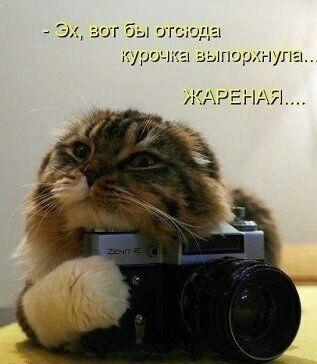 http://www.anekdotov-mnogo.ru/image-prikol/smeshnie_kartinki_138700451825.jpg