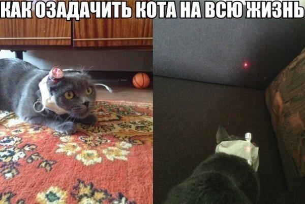 http://www.anekdotov-mnogo.ru/image-prikol/smeshnie_kartinki_138808666346.jpg