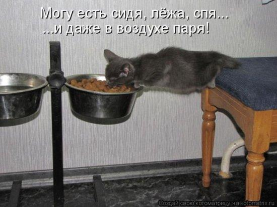 http://www.anekdotov-mnogo.ru/image-prikol/smeshnie_kartinki_138814603927.jpg