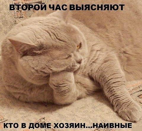 http://www.anekdotov-mnogo.ru/image-prikol/smeshnie_kartinki_138883536029.jpg