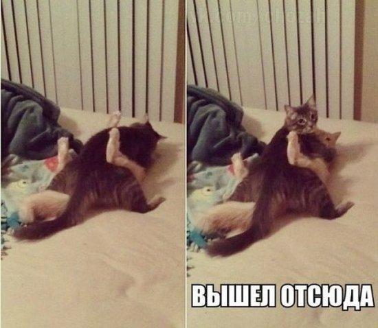 http://www.anekdotov-mnogo.ru/image-prikol/smeshnie_kartinki_138884427453.jpg