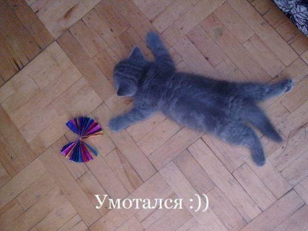 http://www.anekdotov-mnogo.ru/image-prikol/smeshnie_kartinki_138924236959.jpg