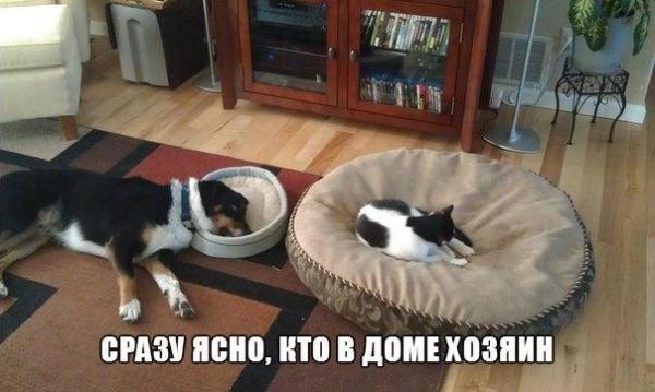 http://www.anekdotov-mnogo.ru/image-prikol/smeshnie_kartinki_138930081628.jpg