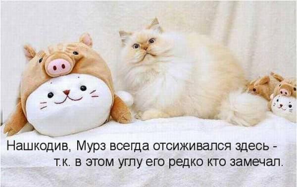 http://www.anekdotov-mnogo.ru/image-prikol/smeshnie_kartinki_138934306784.jpg