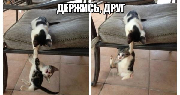 http://www.anekdotov-mnogo.ru/image-prikol/smeshnie_kartinki_138944998517.jpg